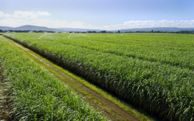 Sugar & Ethanol Africa | 17 – 19 September 2019 | Nairobi