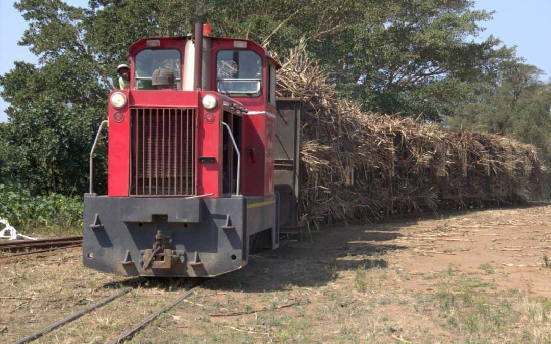 Train Sugar cane hauling