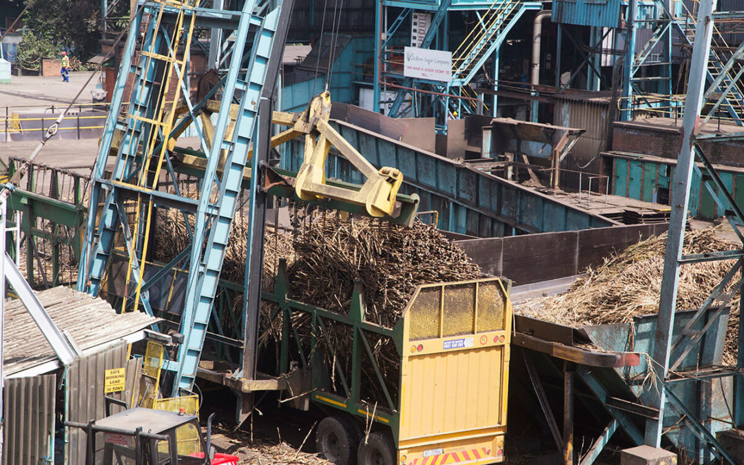 Tough road ahead for sugar millers despite improved yields