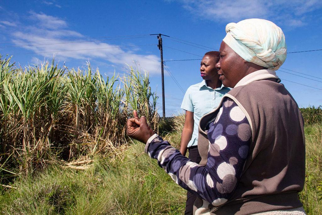 sugarcane-farmer-Rejoice15