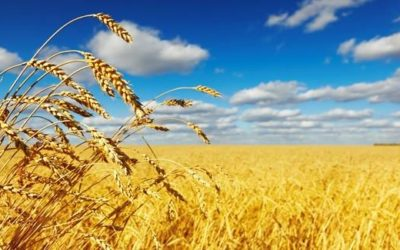 Grain SA's NAMPO Harvest Day – 14 – 17 May 2019
