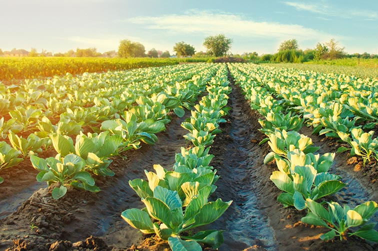 Gradual lifting of lockdown – Impact on agriculture
