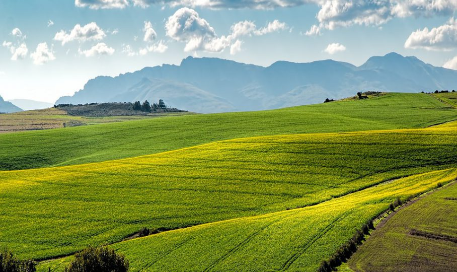The impact of Covid-19 on South Africa's agriculture economy